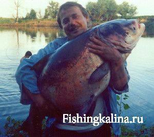 Соображает ли хитрая рыба