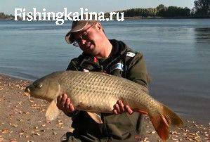 Рыба сазан - трофей