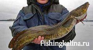 Ловля рыбы налим