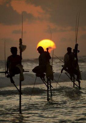 Традиционный способ ловли рыбы в Шри-Ланке