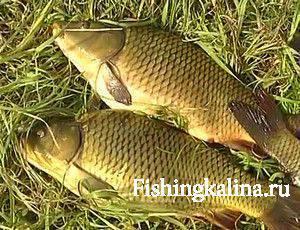 Если не клюет рыба, что же делать