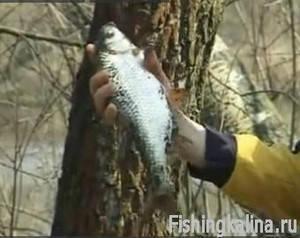Как ловят рыбу фидерной снастью