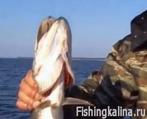 Ловля рыбы на Рыбинском водохранилище