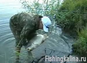 Рыбалка на дикого сазана