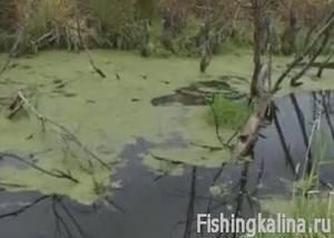 Рыбалка на лесной речке по щуке