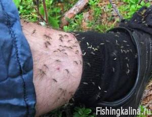 Защита на рыбалке от комаров