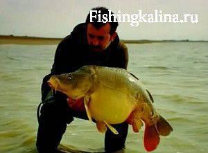 Дикий карп рыбалка