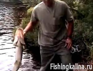 Рыбалка на щуку летом с берега спиннингом