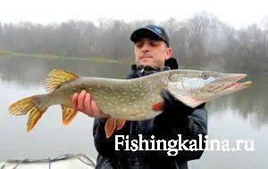 Рыбалка на трофейную щуку