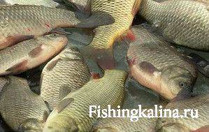 какая рыба ловится зимой в реке клязьма