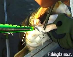 Троллинговая рыбалка на сома применяя воблер