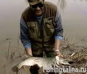 Ловля в Казахстане щуки