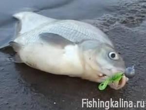 На зимний спиннинг поиск рыбы
