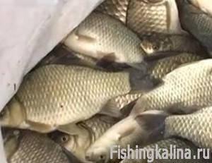 Рыбалка на карася - улов