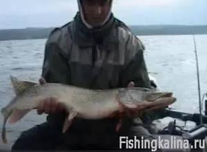 Рыбалка на судака летом на днепре