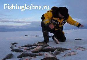 Ловля на льду окуня