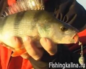 Джиговая рыбалка на окуня