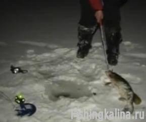Ловля жерлицей щуки зимой