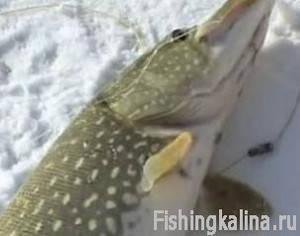 Зимняя рыбалка жерлицами и поставушками