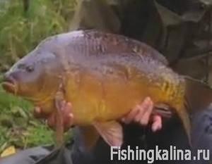 Карповая рыбалка на озере