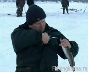 Как поймать налима зимой