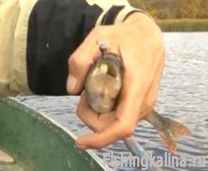 Рыбалка на окуня ультралайтом