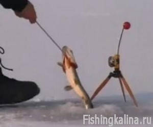 Рыбалка жерлицами зимой на Днепре