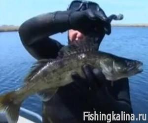 Подводная охота на судака в Казахстане
