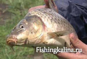 Карповая рыбалка в Николаевской области