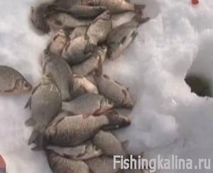 Видеоприложение «Рыбачьте с нами №30» Февраль