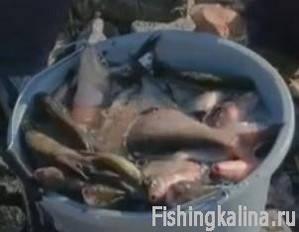 Улов рыбы лещ