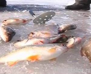 Рыбалка на Истринском водохранилище по последнему льду