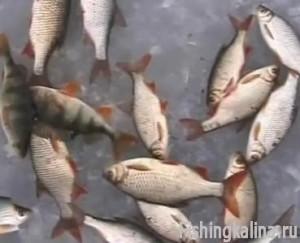 Рыбалка по последнему льду на Истре