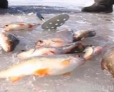 рыбалка на черепетской
