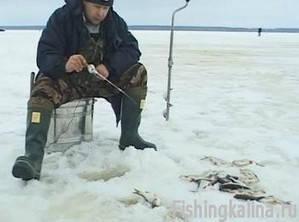 Ловля плотвы зимой на безмотылку на Рыбинке