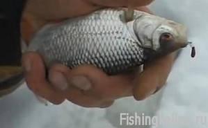 Рыбалка на зимнюю плотву