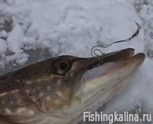 Ловля на жерлицы зимой щуки на реке Молога