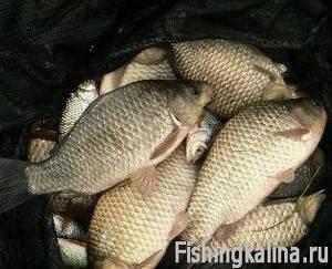 Ловля фидером рыбы карася