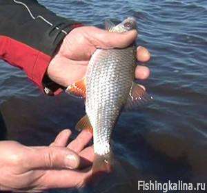 Ловля на резинку различной рыбы