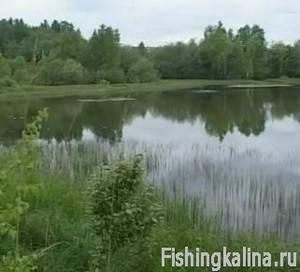 Рыбалка в Подмосковье на озере