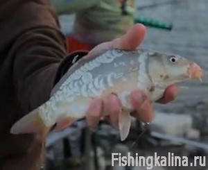 на что клюет рыба на азовском море