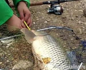 Ловля карпа - Видеоприложение