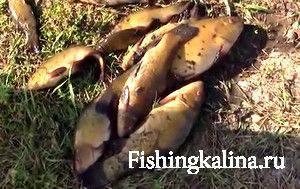 Рыбалка на линя с кивком