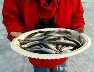 Рыбалка в Ленинградской области на корюшку зимой
