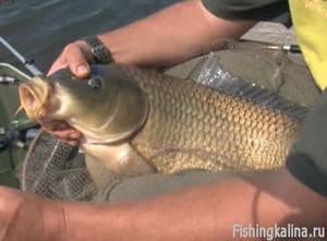 Видеоприложение «Рыбачьте с нами» №35 Июль