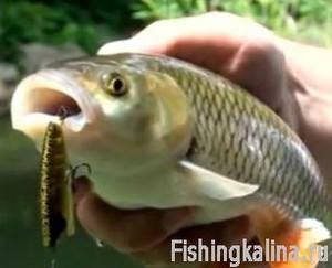 Рыбачьте с нами август