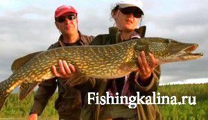 Как успешно ловить хищную рыбу на живца
