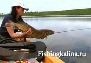 Ловля на живца рыбы