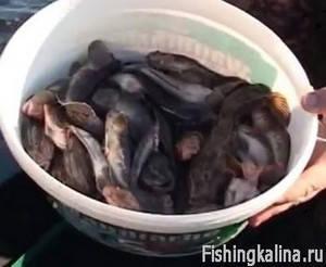Как поймать рыбу бычок