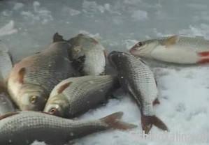 Ловля зимней плотвы